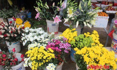Làng hoa nhỏ trong thị trấn Yên Thành