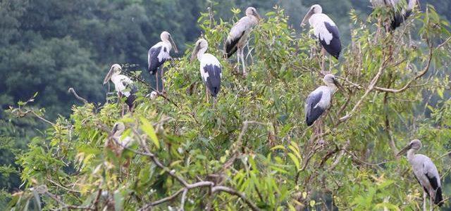 """Người nuôi """"chim trời"""" ở Yên Thành"""