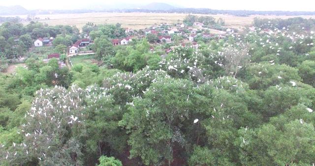 Người nuôi chim trời ở Yên Thành