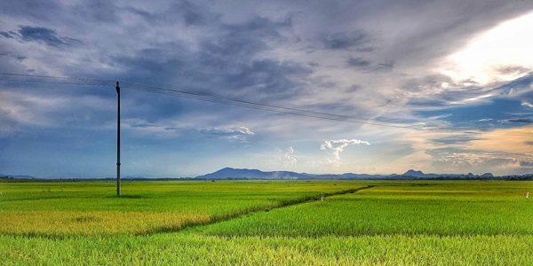 Khoảng trời yên bình trên cánh đồng lúa Yên Thành sau mưa