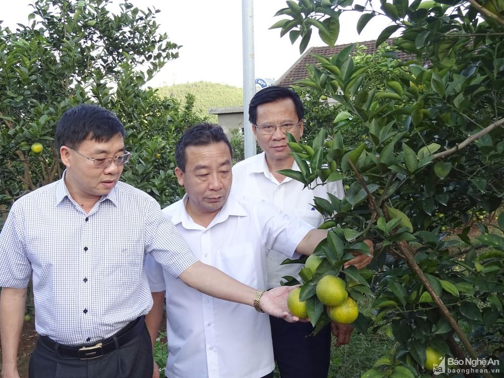 Đồng chí Nguyễn Văn Thông - Phó Bí thư Tỉnh ủy thăm mô hình trồng cam tại xã Đồng Thành